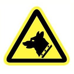 Gevaarlijke hond
